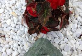 Реализуем саженцы хвойных растений